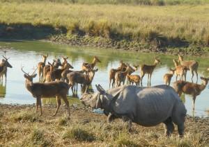 Rhino et dains_1