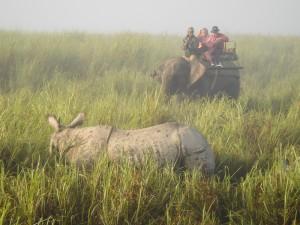 rhino et elephant